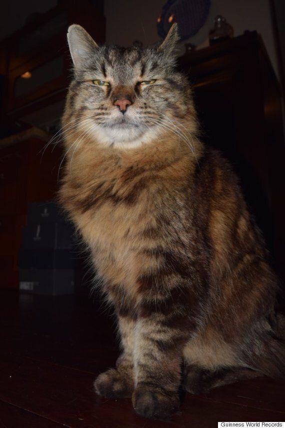 '코듀로이'가 세계에서 가장 나이 많은 고양이다(사진,