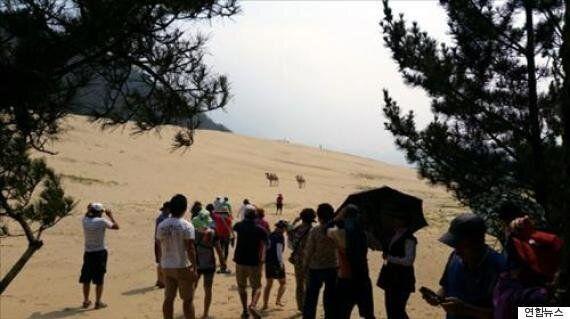 인천 '대청도 모래사막'에 낙타가