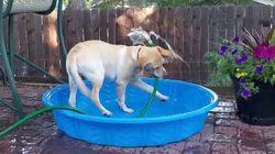 독립적인 강아지가 여름을 나는
