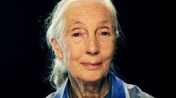 제인 구달, 사자 '세실'의 죽음에서 희망을