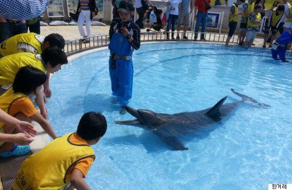 돌고래와 함께 수영하고, 사진 찍고, 뽀뽀하는 체험 뒤에는 충격적인 진실이 감춰져
