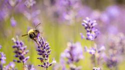 꿀벌이 사라지면 140만명이 사망할 수도