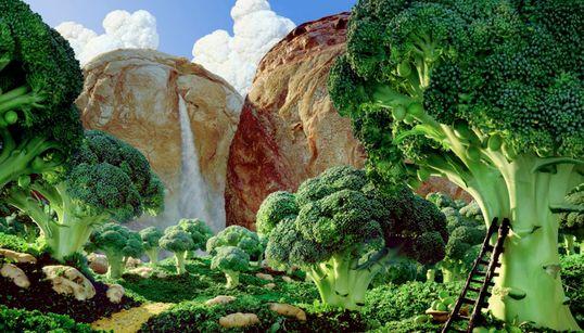음식으로 만든 상상의 세계