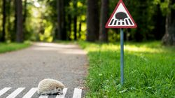 도시의 동물들을 위한 작은 도로