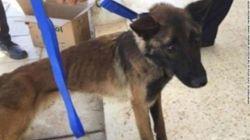 Πεθαίνουν της πείνας οι αστυνομικοί σκύλοι που χάρισαν οι ΗΠΑ στην