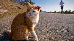 호주 정부, 길고양이 살처분 계획