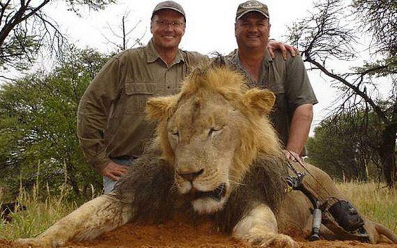 사자 '세실'을 죽인 미국인 치과의사에게 전 세계의 분노가 쏟아지고