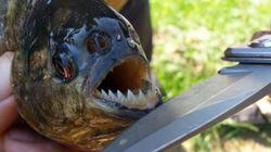 '횡성 피라냐' 발견, '제6 대멸종'