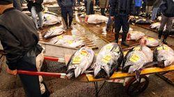 태풍 강타한 일본서 참치 1만 마리