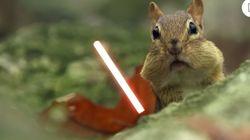 다람쥐의 손에 라이트세이버를