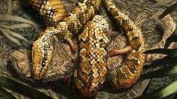 뱀의 조상을