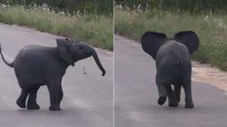 아기 코끼리가 길 한복판에서 새떼를