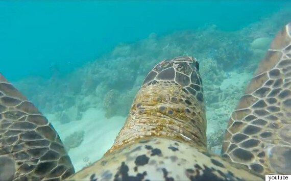 고프로를 단 바다거북이 산호초 세상을