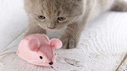 고양이 집사를 위한 고양이에 관한 6가지