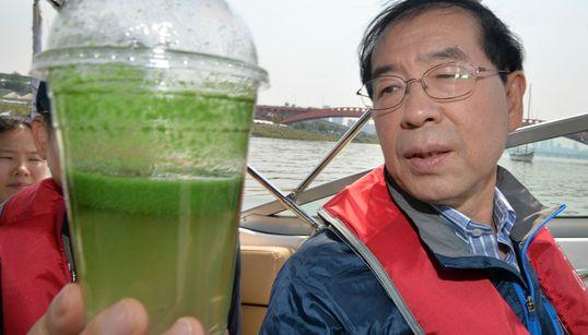 [화보] 이것은 강이 아니다 : 녹색으로 물든