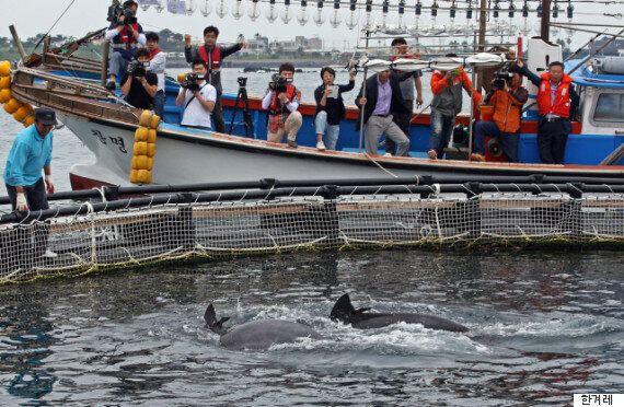 돌고래는 사람들 모르게 전속력으로