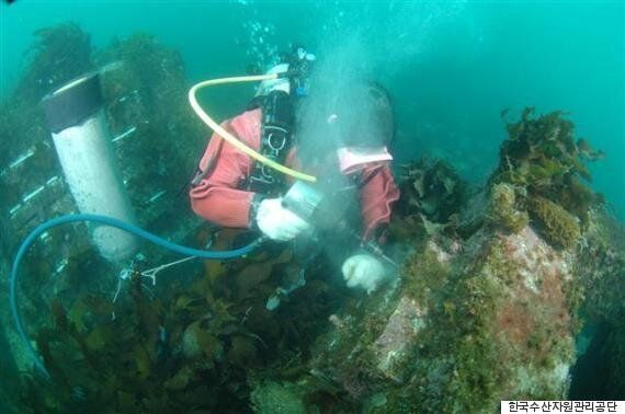동해안 연안, 무려 62%가 '바다 사막화'(사진,