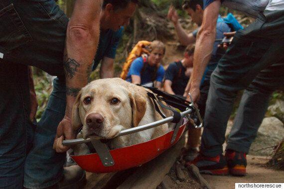 6명의 구조대와 헬기 한 대가 개를 구하러
