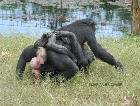 옛날 옛적부터 동성애를 해온 동물