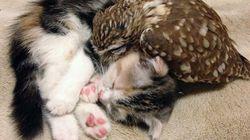 새끼고양이와 새끼올빼미, 절친