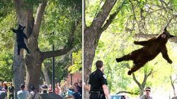 대학교 캠퍼스에 다시 한 번 곰이