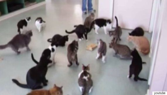 이것은 그저 깜짝 놀란 고양이를 모은 동영상일