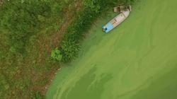 이건 우리가 알던 강의 모습이