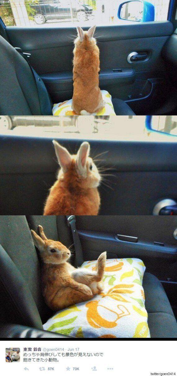 키 작은 토끼는 포기가 빨랐다(연속