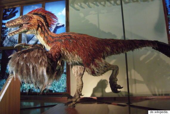 깃털 달린 공룡을 보고