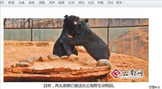 중국 농민이 시장에서 사와 2년 동안 같이 산 강아지 두 마리, 키워보니