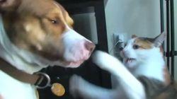 고양이 VS 개 : 새로운 권력