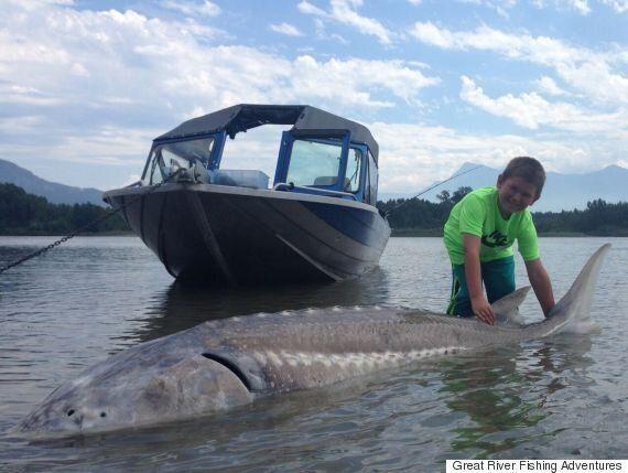 9살 소년, 3미터짜리 흰철갑상어를