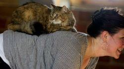 고양이는 요가의 친구, 요가는 고양이의 친구다(사진,