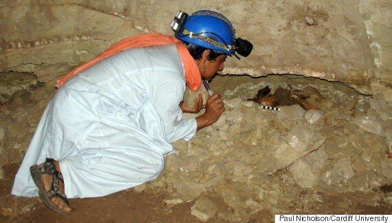 이집트 고대 지하 무덤에서 수백만 마리의 '미라 개'가