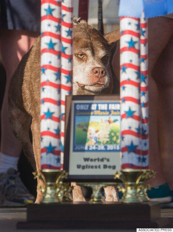 세계에서 가장 못생긴 개로 선정된 개, 이름은