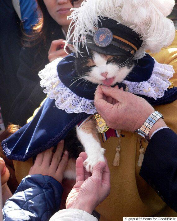 일본 와카야마 전철 역장 고양이 '다마'가 16살로 무지개 다리를