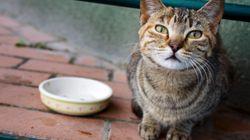 당신의 고양이를 죽일 수도 있는 사람 음식