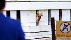 낙타보다 무서운 인수공통전염병
