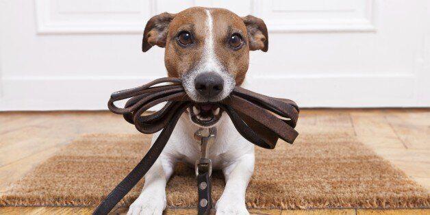 반려동물의 분리불안에 대한 7가지