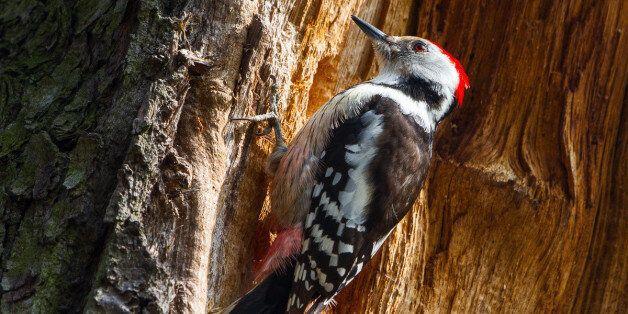 독일이 군사기지 62곳을 새, 딱정벌레와 박쥐 보호구역으로