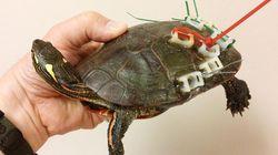 철물점 물건들로 교통사고 난 거북을 치료하다(사진,
