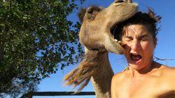 낙타와 셀카를 찍지 마시오.