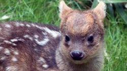 뉴욕에서 태어난 귀염둥이 동물의