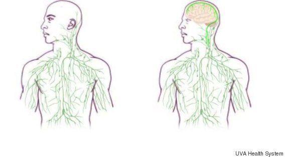 뇌와 면역 체계 사이의 연결이 새롭게