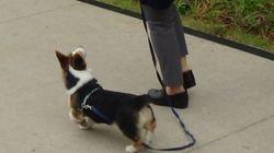 왜 우리 강아지는 항상 줄을 당기며 걷는