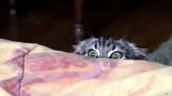 고양이들은 최고의 스파이들이다(동영상