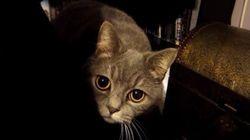 이 한 장의 고양이 사진을 찍기