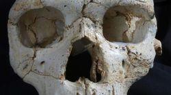 인류 최초 피살자의 두개골이