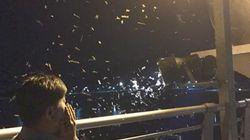 '이포보' 대형 하루살이의 습격(사진,