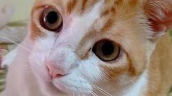 고양이와 노래를 불러본 적